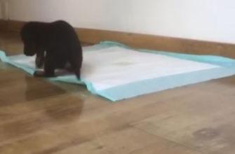 Как отучить собаку писать дома на коврик