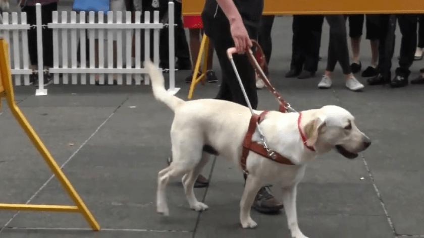 Воспитание собаки: правила и методы