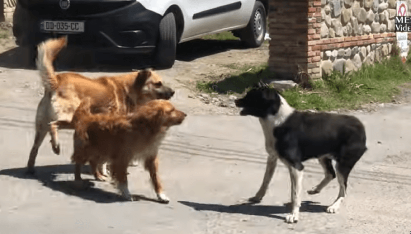 Зооагрессия у собаки: причины