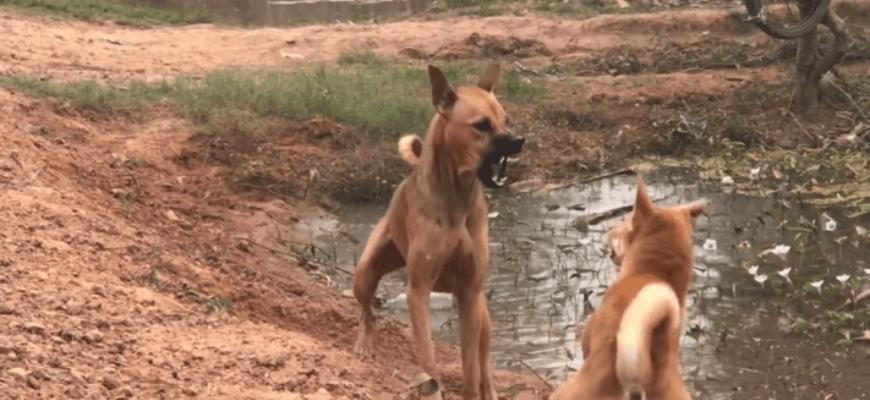 зооагрессия у собаки