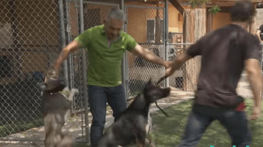 Зооагрессия у собаки: что делать, если поведение закрепилось
