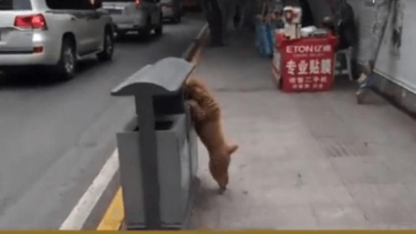 Почему собака подбирает на улице