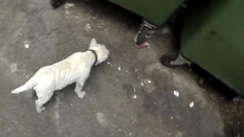 Собака подбирает всё на улице: как отучить