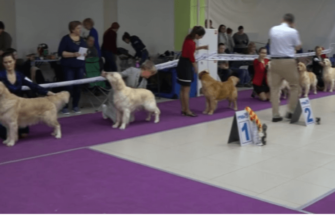 Что взять с собой на выставку собаки в первый раз