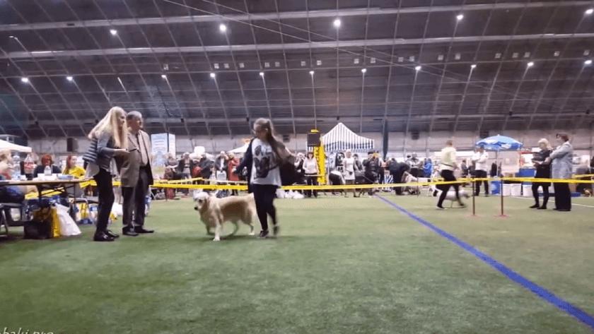 Что нужно взять на выставку собак