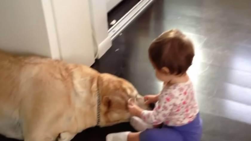 Какие собаки лечат детей