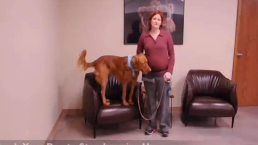 Как научить собаку запрыгивать в багажник машины