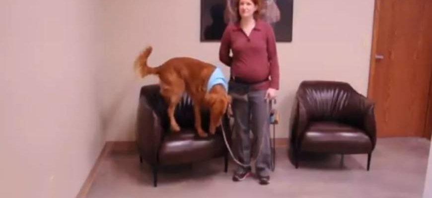 Как научить собаку запрыгивать на объекты
