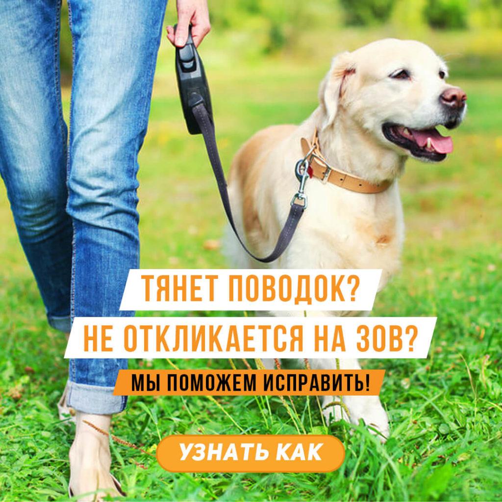 Как исправить поведение собаки