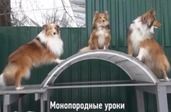 Книги по воспитанию собаки: краткий обзор