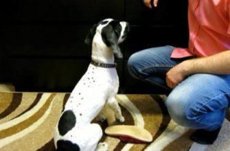 как научить собаку приносить тапочки по команде