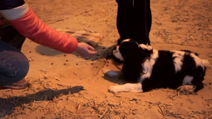 Как научить собаку команде Нельзя и Фу