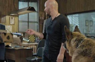 Кто играет в сериале Пёс Пса: 5 собак