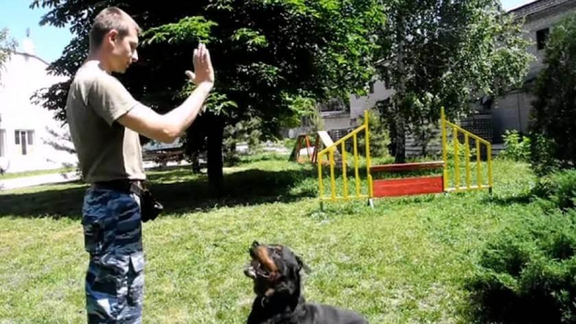 """Команда """"Сидеть!"""": обучение собаки жесту."""