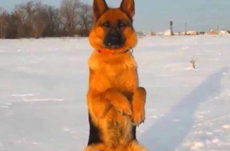 """Команда """"Зайка!"""" для собаки"""