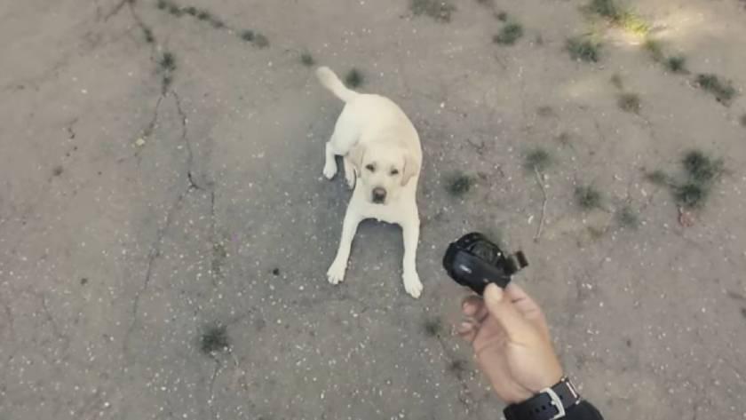 Электронный ошейник для собак: советы по применению