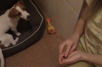 Команда Место для собаки: обучение